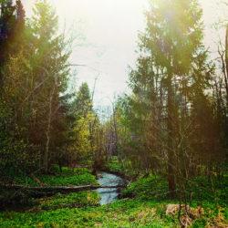 Закон «о лесной амнистии» вступил в силу