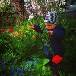 Весна. Сад и Огород.